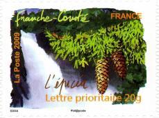 065 310 25 04 2009 flore du sud l epicea franche comte
