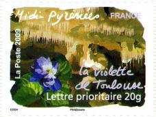 068 312 25 04 2009 flore du sud la violette de toulouse midi pyrenees