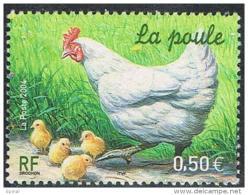 07 3663 24 04 2004 poule
