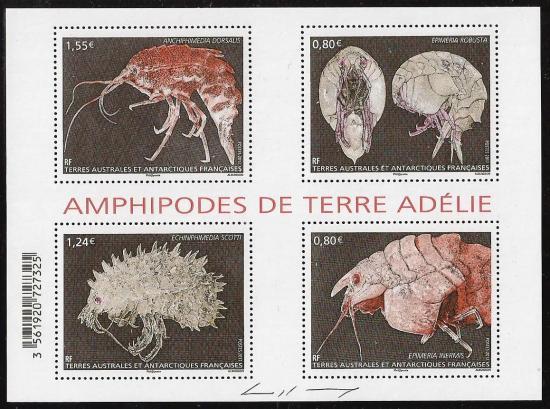 1 01 01 2017 amphipodes de terre adelie 1