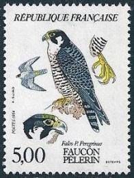 144 2340 22 09 1984 faucon 1