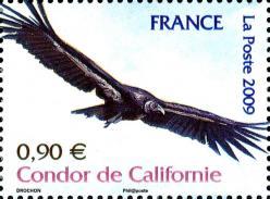18 4375 20 06 2009 condor de californie