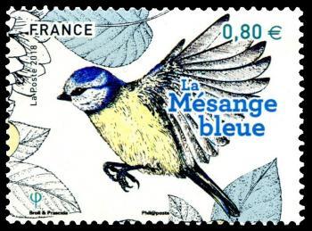 19 10 06 2018 les oiseaux de nos jardins mesange