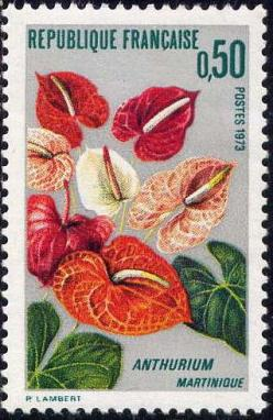 20 1738 1973 anthurium de la martinique 1