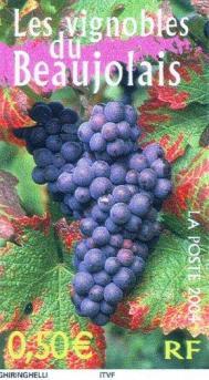 3648 26 03 2004 le vignoble du beaujolais 3