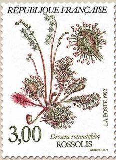 49 2767 1992 rossolis