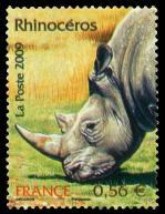 53 4373 20 06 2009 rhinoceros