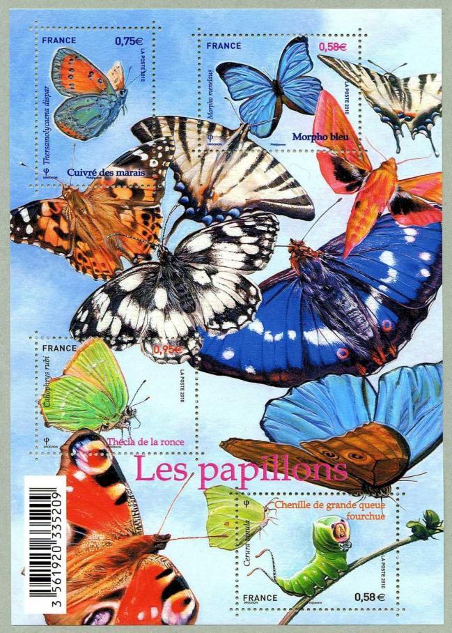 61 4498 4501 03 09 2010 papillons