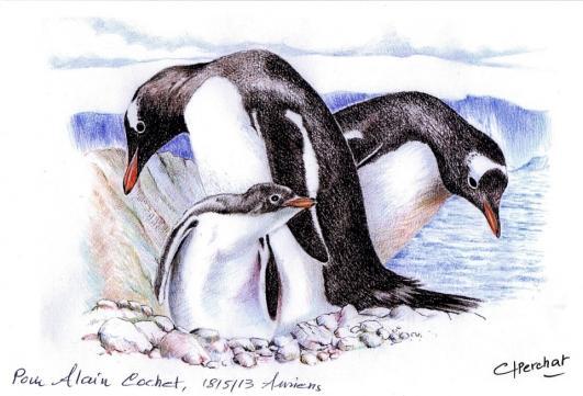 66 po595 30 08 2011 manchots papous
