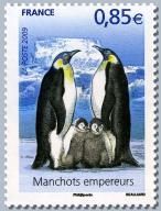 99 4351 28 03 2009 pole albatros