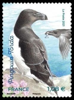 Oiseaux pingouin torda 2021 gf